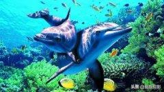 海底世界门票:重庆哪个海洋馆最便宜?