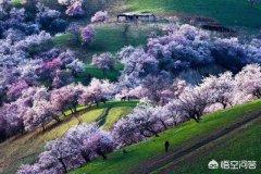 特色旅游:春暖花开,你的家乡有什么特色旅游景点?