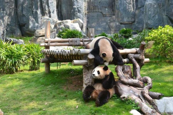 深圳野生动物园门票多少钱