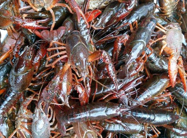 生鲜小龙虾各地价格不同,有的6元/斤有的35,网上会便宜些吗?