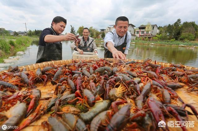 吃小龙虾的季节已经到来,小龙虾的价格走势如何呢?