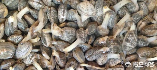 土豪吃过带壳的海鲜都是什么?