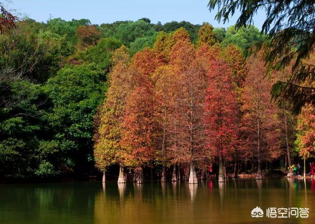 想带家人去广州的华南植物园,贵吗?值得去吗?