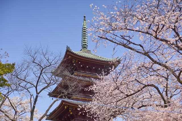 日本七天左右的旅游行程,应该怎么玩?