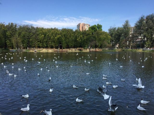 我一人来春城旅游,春城的朋友能否介绍一下景区?