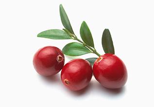 蔓越莓的药用价值