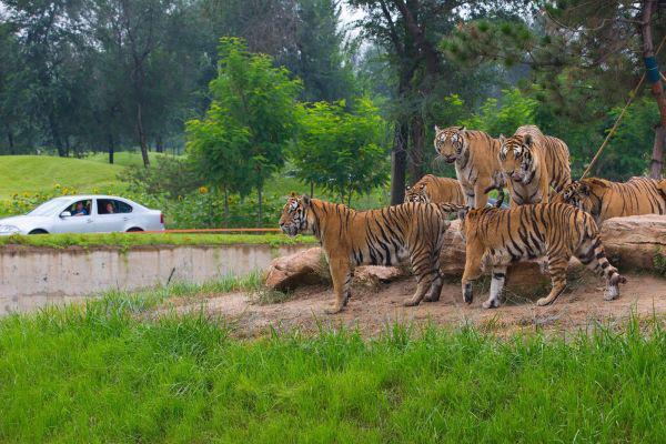 北京大兴野生动物园门票详情